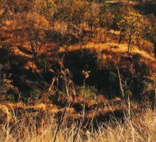 Dry Mountainous National Park Landscape Sticker