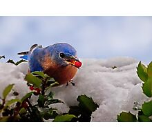 Berry Treat Photographic Print
