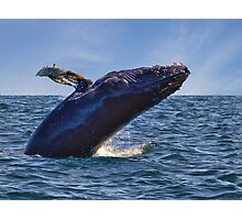Whale Watching - Nova Scotia Photographic Print
