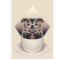 Caffeinimals: Owl Photographic Print