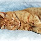 Sleepy Kitty by Susan S. Kline