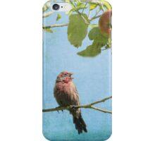 Finch Singing in Apple Tree iPhone Case/Skin