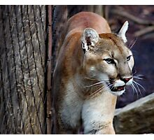 Wildlife Beauty Photographic Print