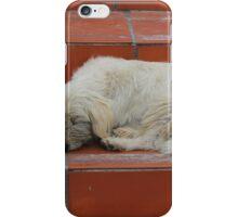 Dog Sleeping on Steps iPhone Case/Skin