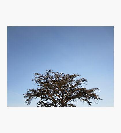 Treetop Photographic Print