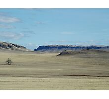 Prairie Buttes with Lone Tree Photographic Print