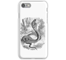 Vintage Snake Hooded Serpent Illustration Retro 1800s Black and White Snakes Reptile Image iPhone Case/Skin