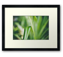 Tranquil Green Framed Print