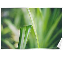 Tranquil Green Poster