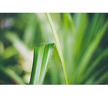 Tranquil Green Photographic Print