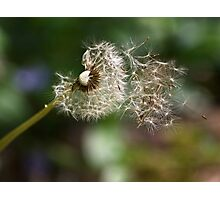 Blowing In the Wind Photographic Print