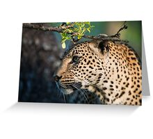 Leopard Profile Greeting Card