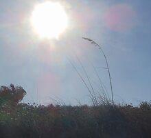 Sun Flare Sea Oats by swiftwolf