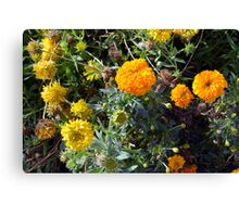 Beautiful yellow flowers in the garden. Canvas Print