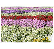 Beautiful colorful stripes of flowers. Poster