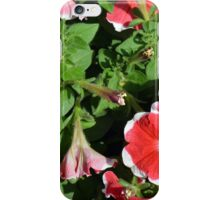 Pink flowers with white borders in the garden. iPhone Case/Skin