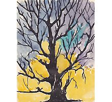 A bird with a song  on a branch of me Photographic Print