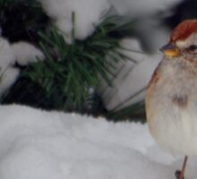 American Tree Sparrow Sticker