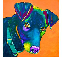 "Colourful Black Lab ""Cooper""  Photographic Print"