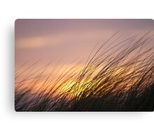 Dune Grass at Sunset Canvas Print