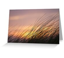 Dune Grass at Sunset Greeting Card