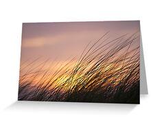 Dune Grass at Sunset Greeting Card