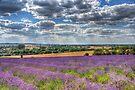 Lavender Farm by Nigel Bangert