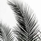 Palm Leaves by Mareike Böhmer