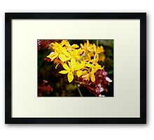 Flowers photography by Melissa McCoy Framed Print