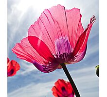 Poppies and Sky 2  Photographic Print