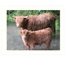 Hairy Coos – Scottish Highland Cattle, Cow & Cute Calf Art Print