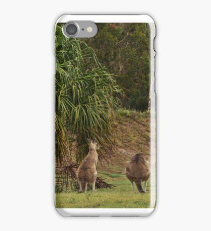 Kangaroos in Tropical Queensland iPhone Case/Skin