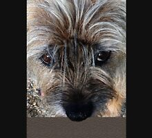 Border Terrier portrait Unisex T-Shirt