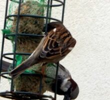 Little sparrows  Sticker