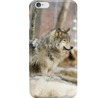 Watchful Timber Wolf iPhone Case/Skin