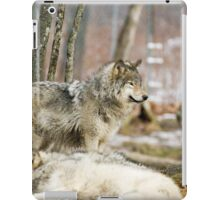 Watchful Timber Wolf iPad Case/Skin