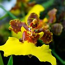 Orchid 6 by Joy Fitzhorn