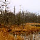 Timberland Lake - Late Fall by Joy Fitzhorn