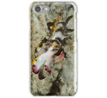 Flamboyant cuttlefish - Metasepia pfefferi iPhone Case/Skin