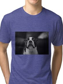 Guilty Boston Terrier Tri-blend T-Shirt