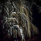 Night Tree by barkeypf