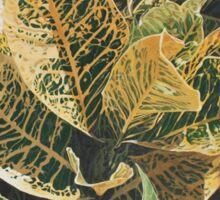 Yellow Green Croton Plant Sticker