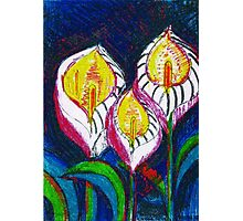 Transparent Lilies (original drawing) Photographic Print