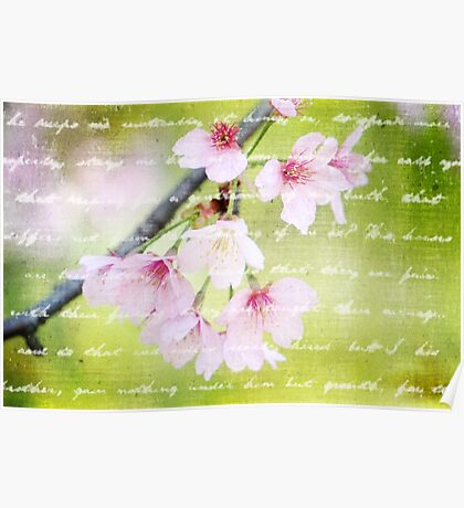 Pale Pink Sakura Cherry Blossoms Antique Handwritten Letter Poster