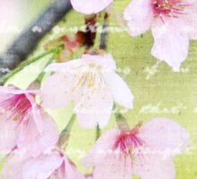 Pale Pink Sakura Cherry Blossoms Antique Handwritten Letter Sticker