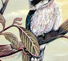 The Charming Kookaburra by Linda Callaghan