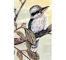 The Charming Kookaburra Photographic Print