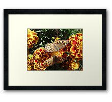 Meadow Argus Butterflies Framed Print