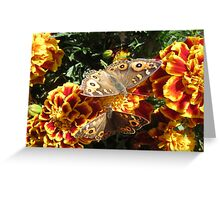 Meadow Argus Butterflies Greeting Card