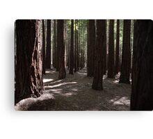 Warburton Redwood Canvas Print